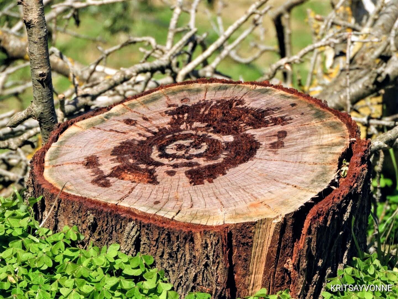 D Wood